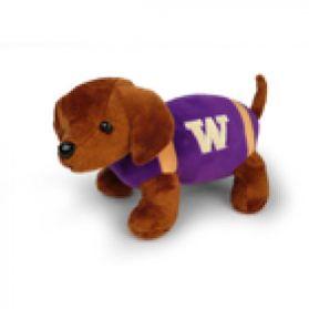 Washington Football Dog